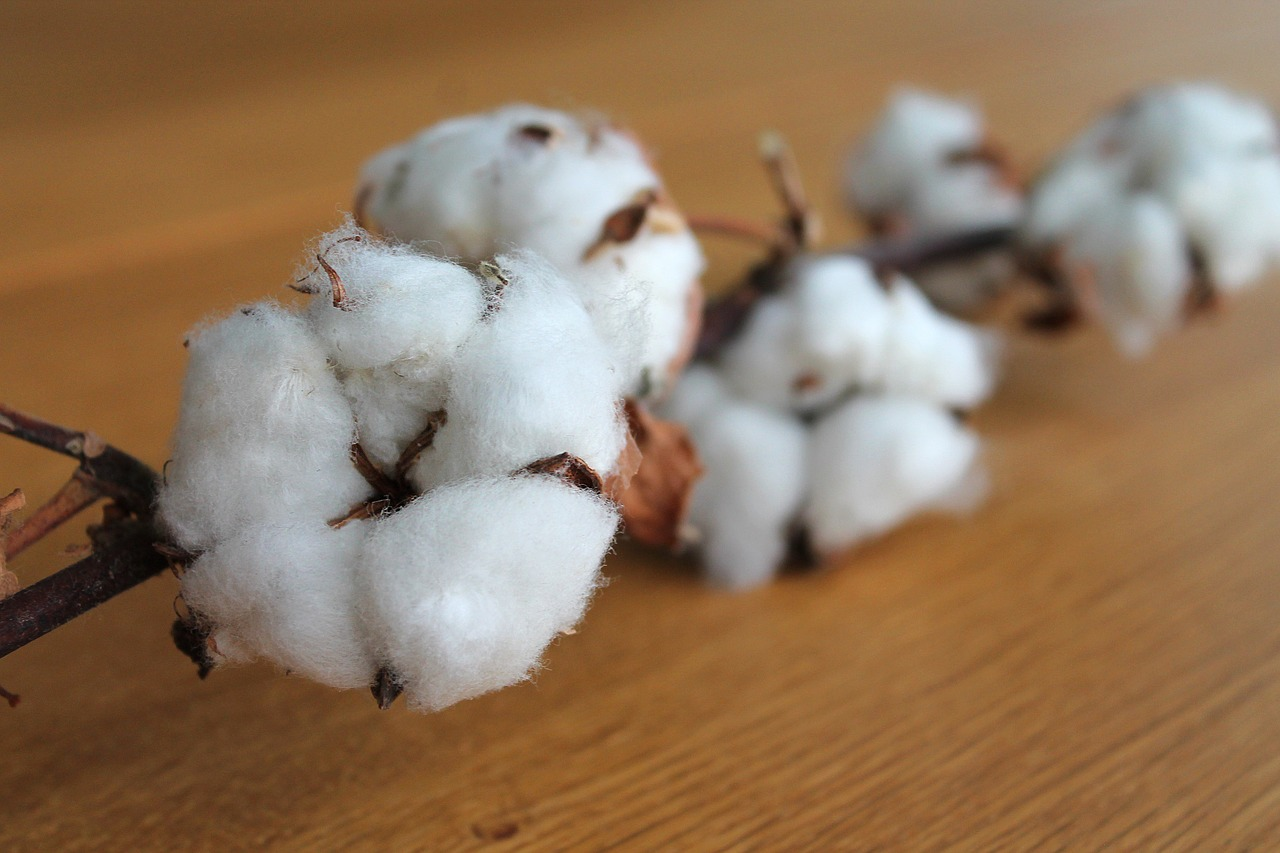 a branch of puffy white cotton buds on a table