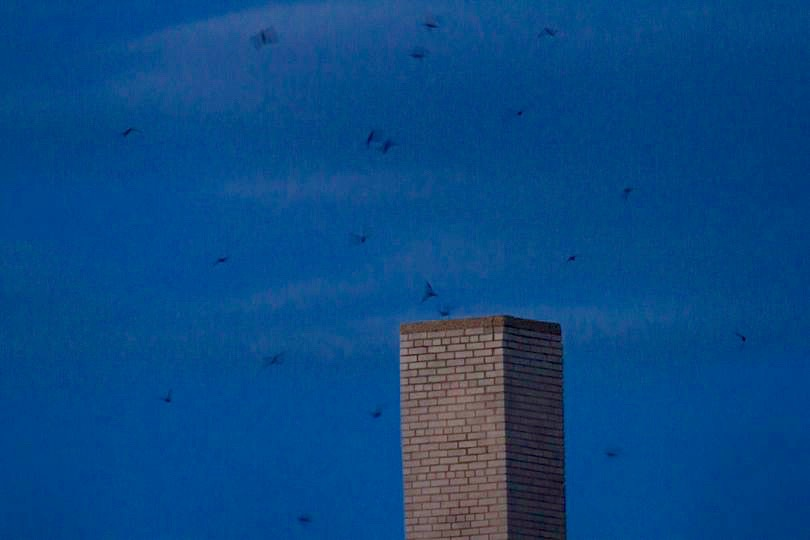Ripples from the Dunes: Chimney Swifts