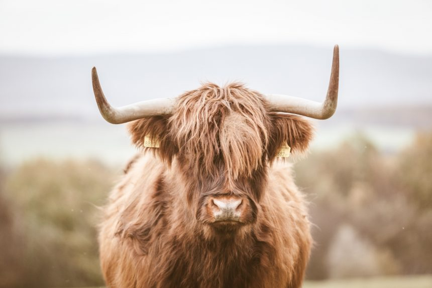 Ethereum Bull